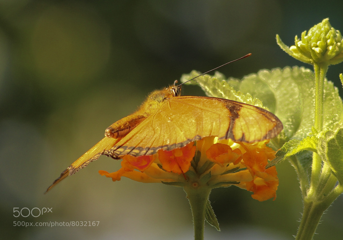 Photograph Naranja by Antonio Sáiz on 500px
