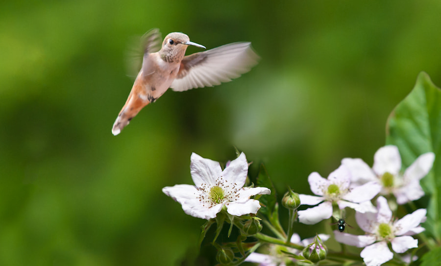 Photograph A Bird and a Bee by Dean Stainbrook on 500px