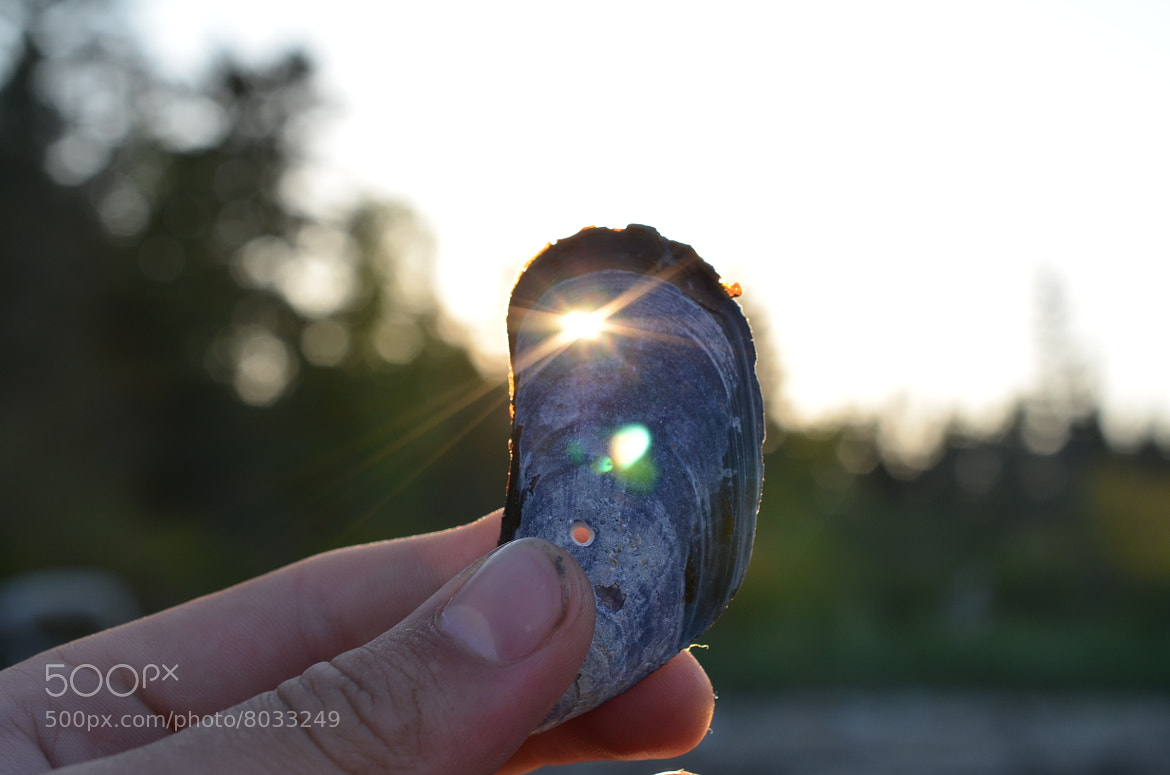 Photograph Mussel Shell Sunset by Sean Beaulieu on 500px