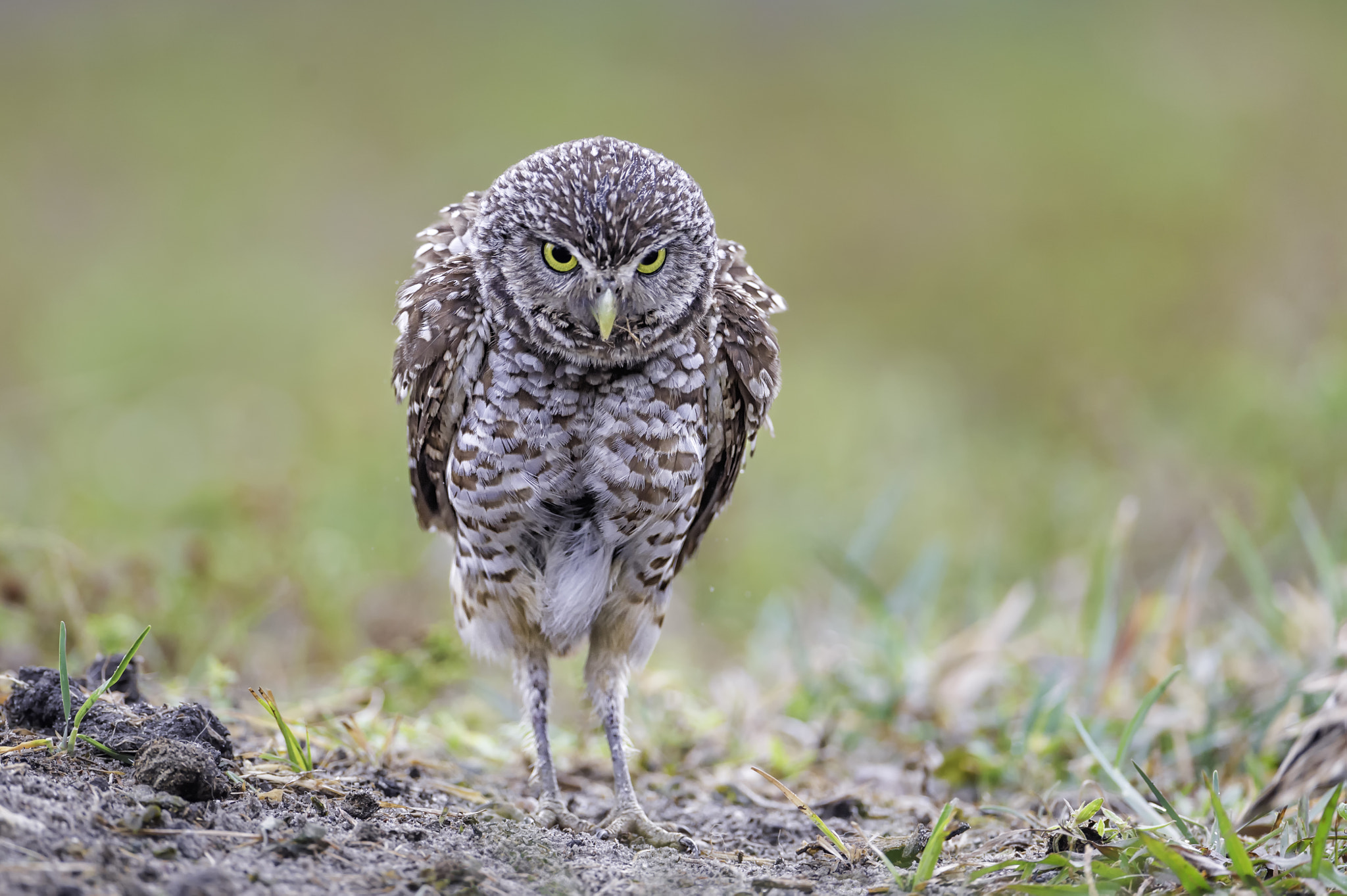 Photograph Miffed mayhaps...? by Daniel Parent on 500px