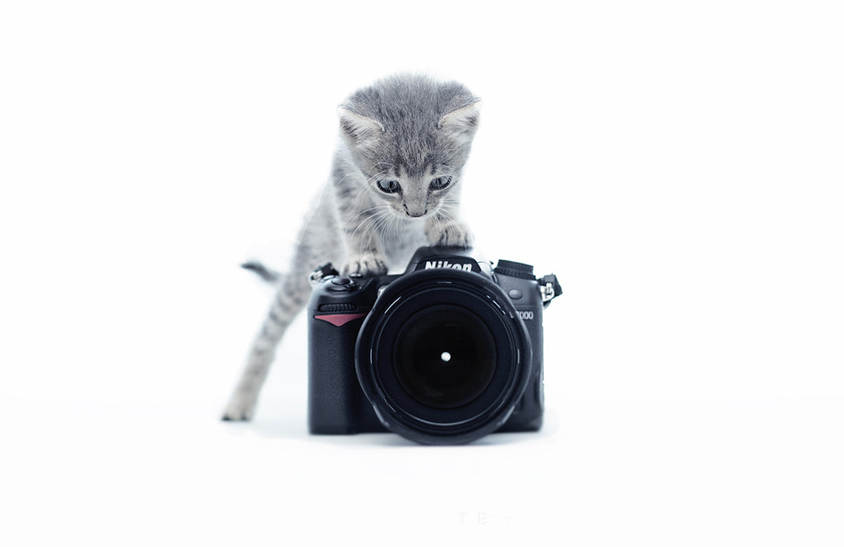 Cat Pictures Funny Cat Pictures