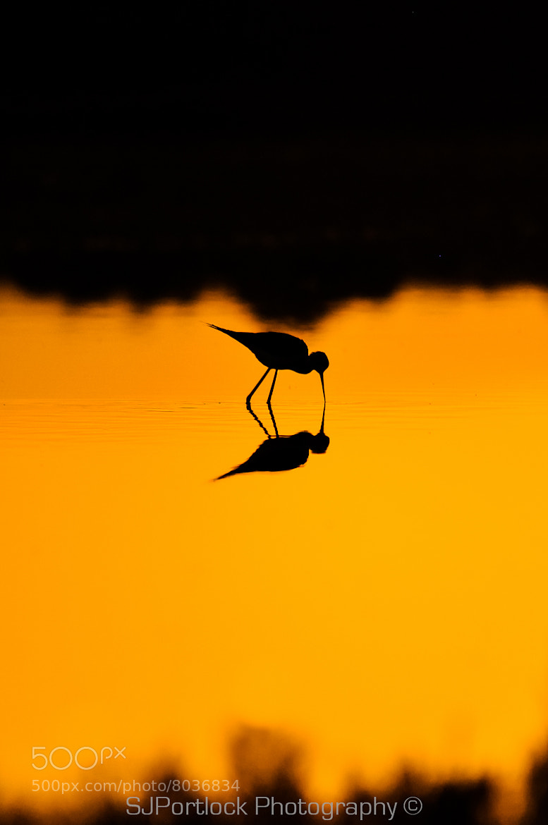 Photograph Silhouette Stilt  by Stephen Portlock on 500px