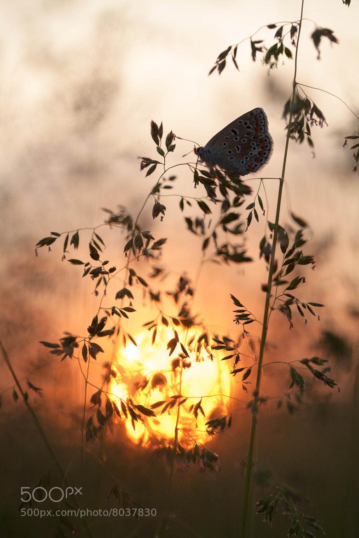 Photograph Il tramonto del licenide by Stefano Romanò on 500px