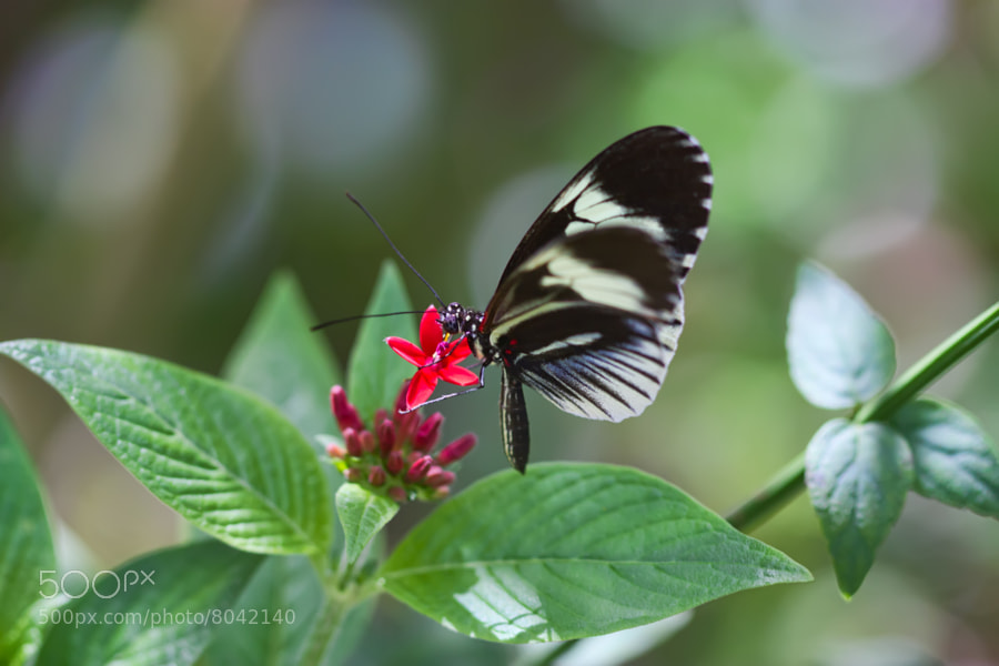 Butterfly World, Coconut Creek, Flroida.