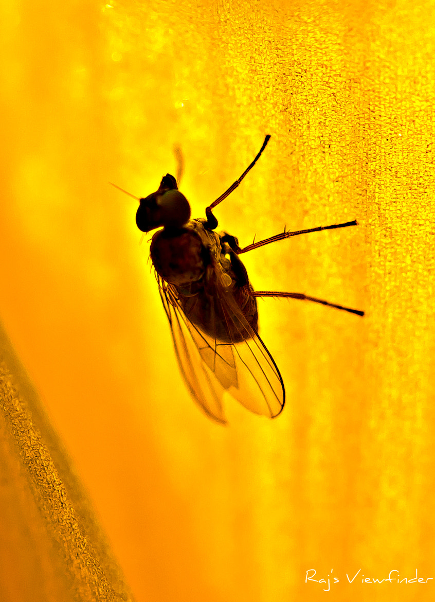 Photograph Fabulous Fly by Raj's Viewfinder on 500px