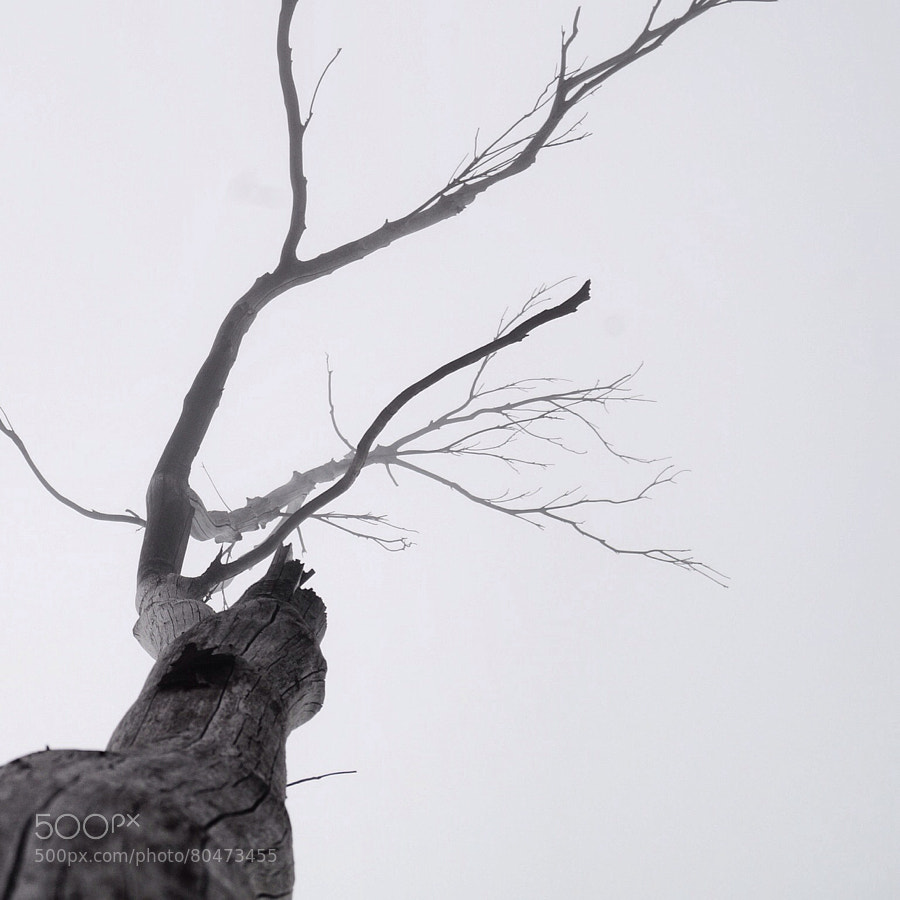 Life's Tree by Gondho Onaka