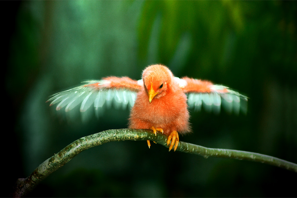 Photograph Mommy...I Can Fly Now!!! by Muhammad Buchari on 500px