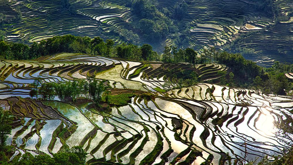 Photograph Reflections, Yuanyang, Yunnan province, China by William Yu on 500px