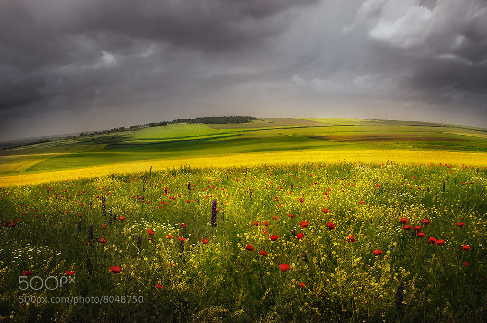 Photograph Late Spring in the Fields by Albena Markova on 500px