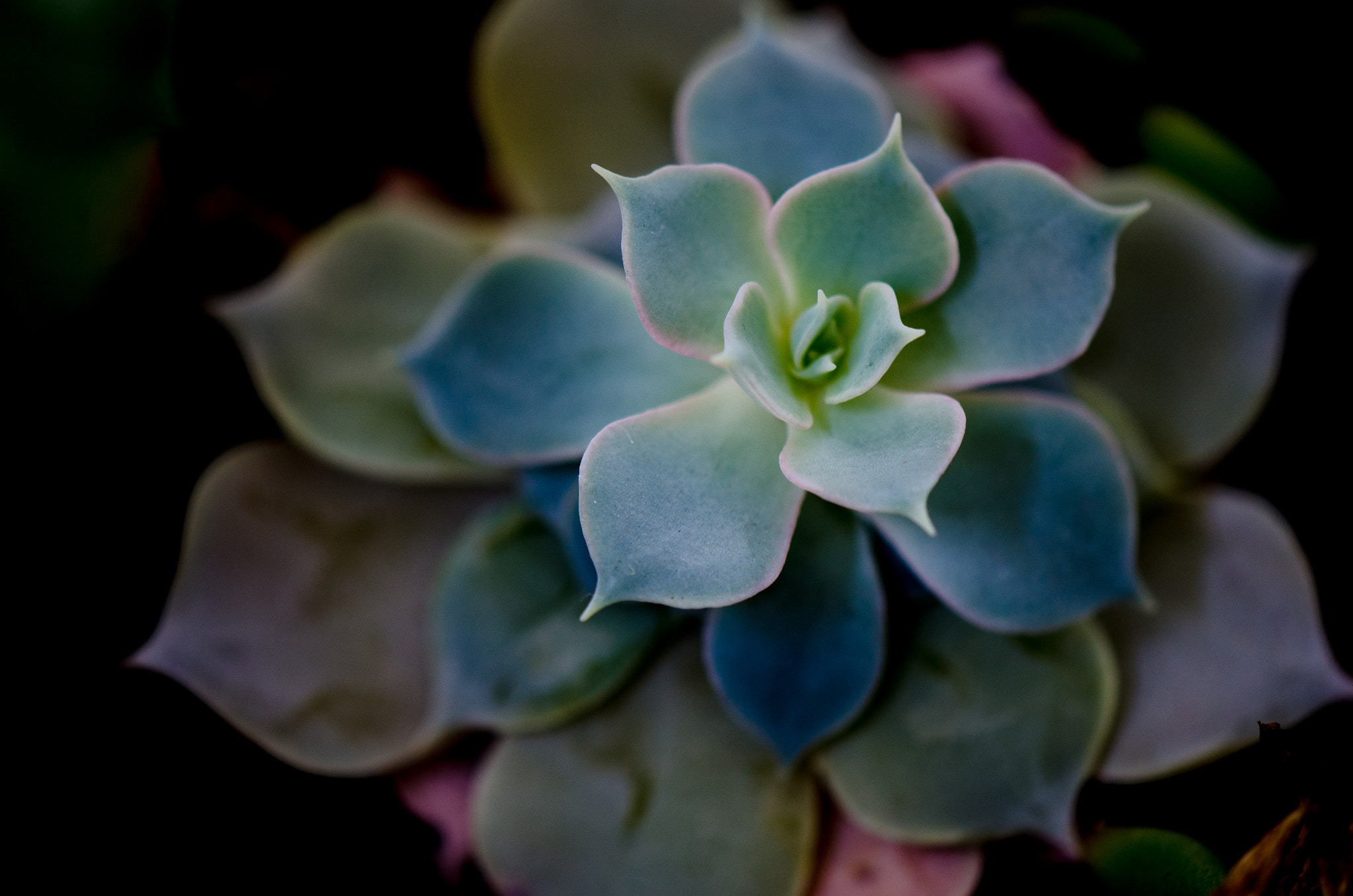 Photograph Rainbow Succulent  by David McCurry Photography on 500px