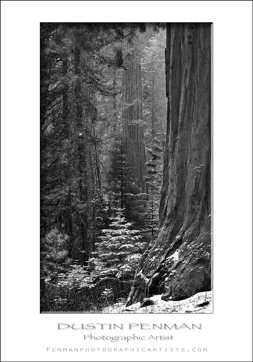 Photograph Among Giants by Dustin Penman on 500px