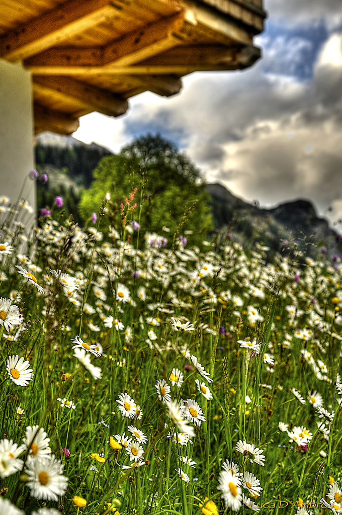 Photograph flowers by Luca D'Ambros on 500px