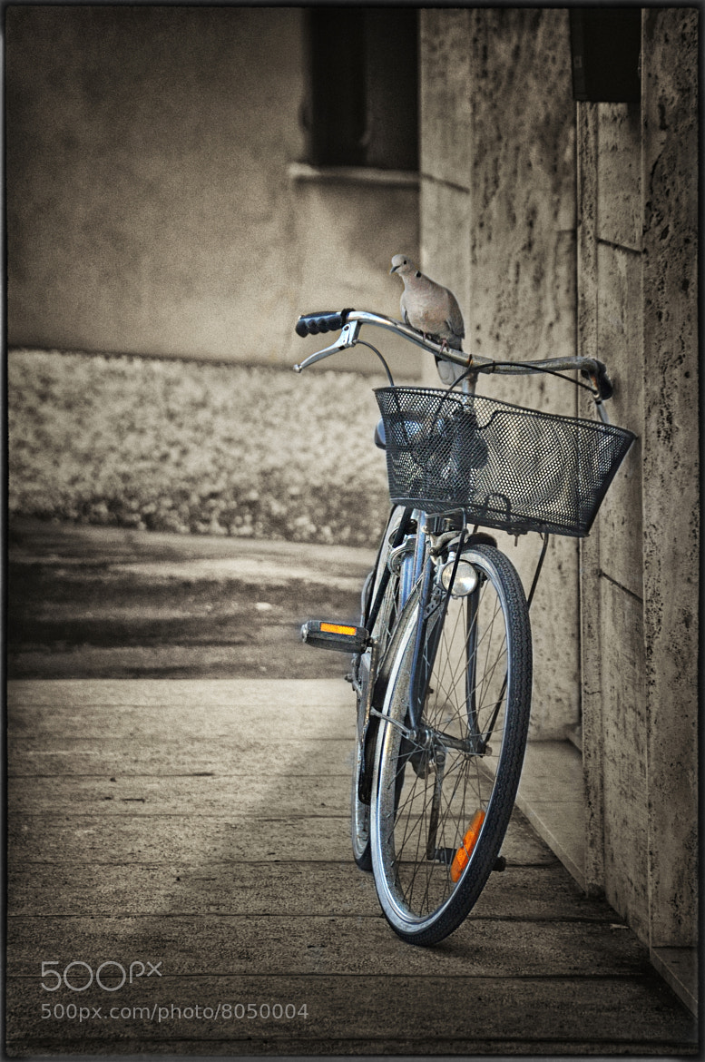 Photograph I ride a bike  by Silena  Lambertini on 500px