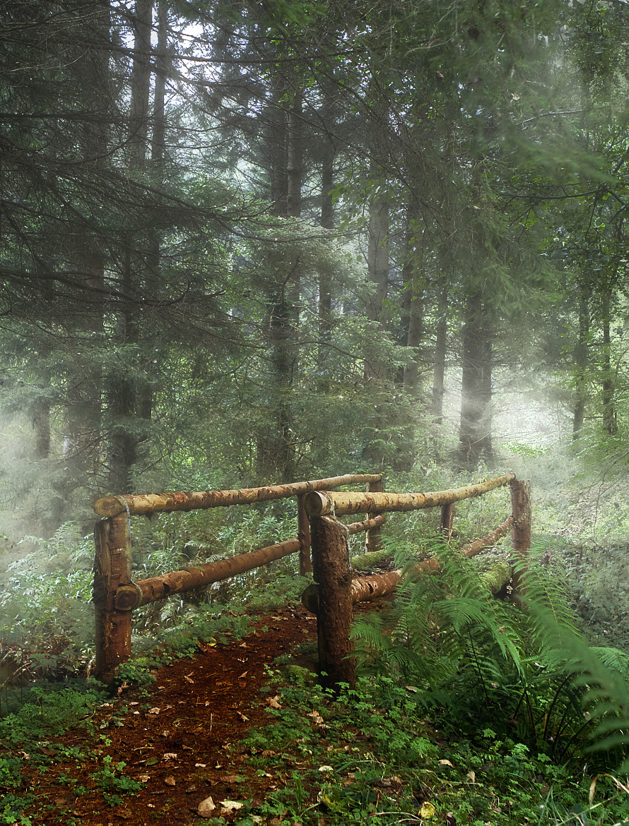 Photograph Forest by Hobby  on 500px