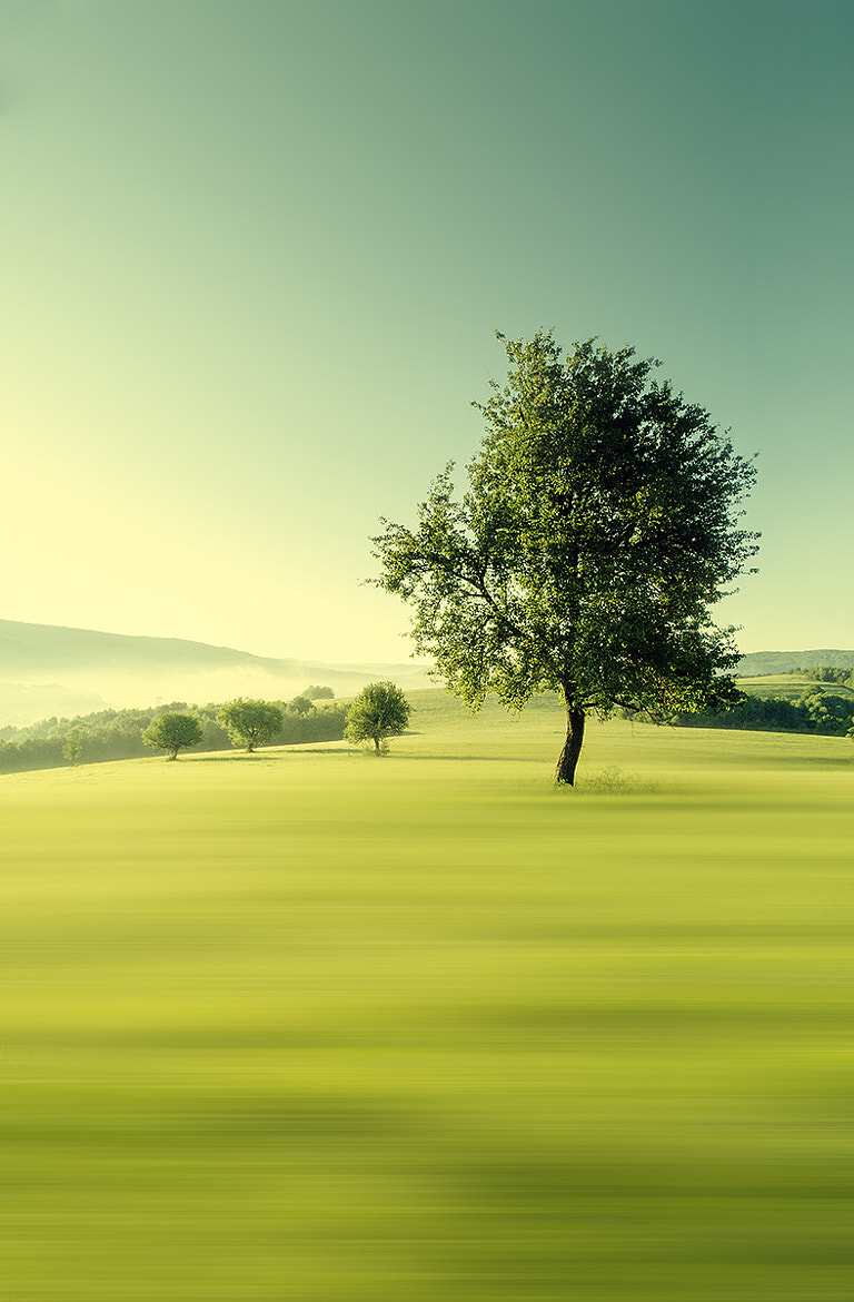 Photograph Green morning by Martin Smolak on 500px