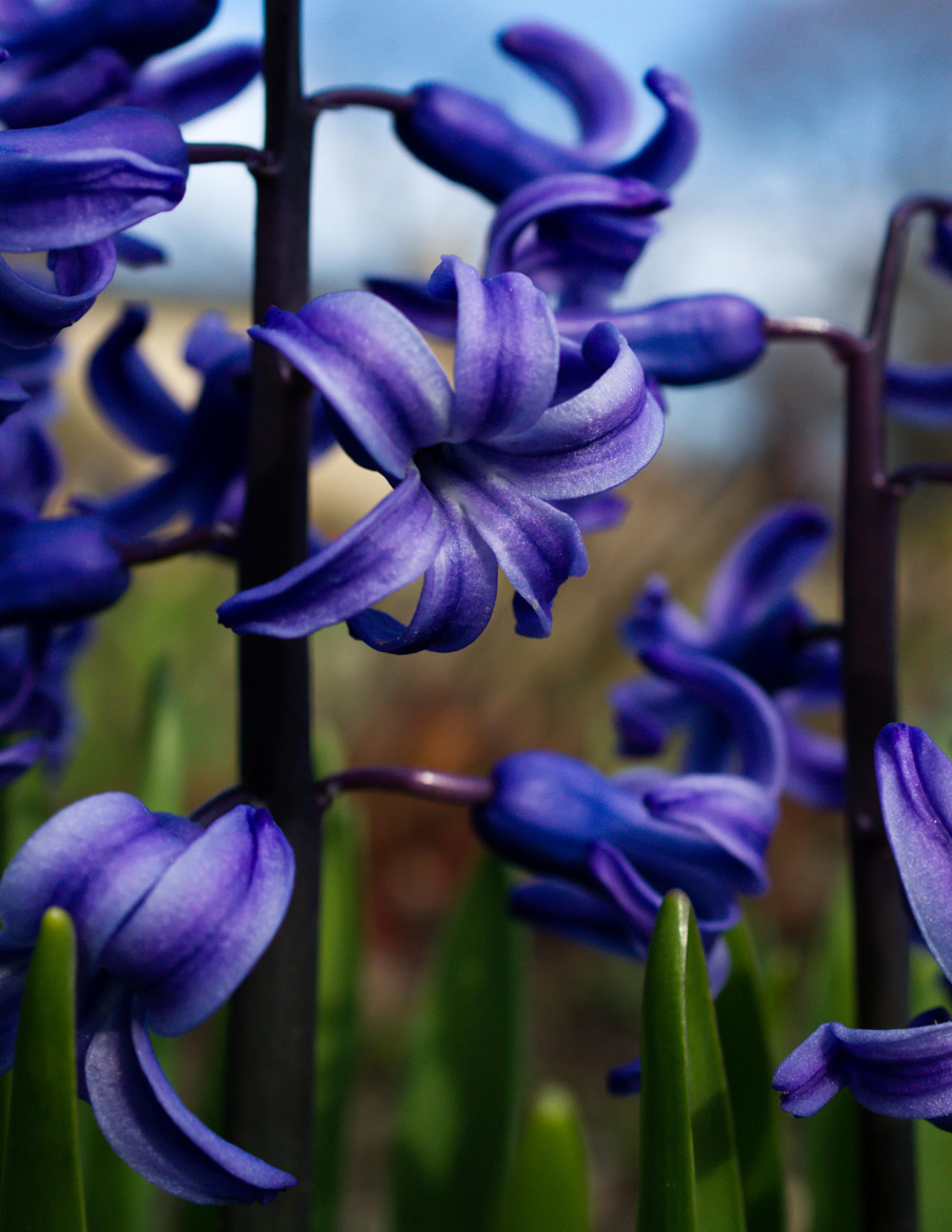 Photograph Spring Flowers by Andrea Gimblett on 500px