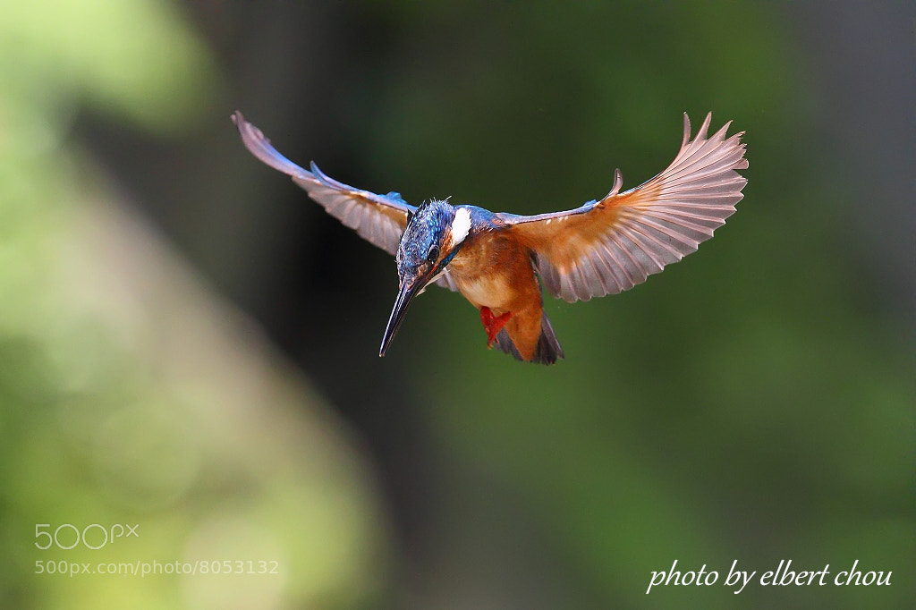 Photograph Sky Dancer by Elbert Chou on 500px