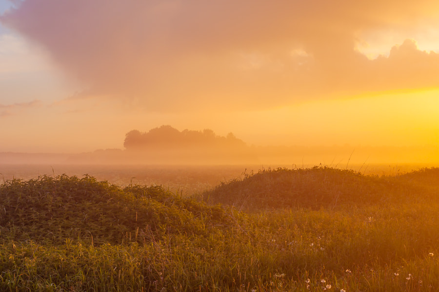Photograph Foggy meadow at sunset by Roman Tsubin on 500px
