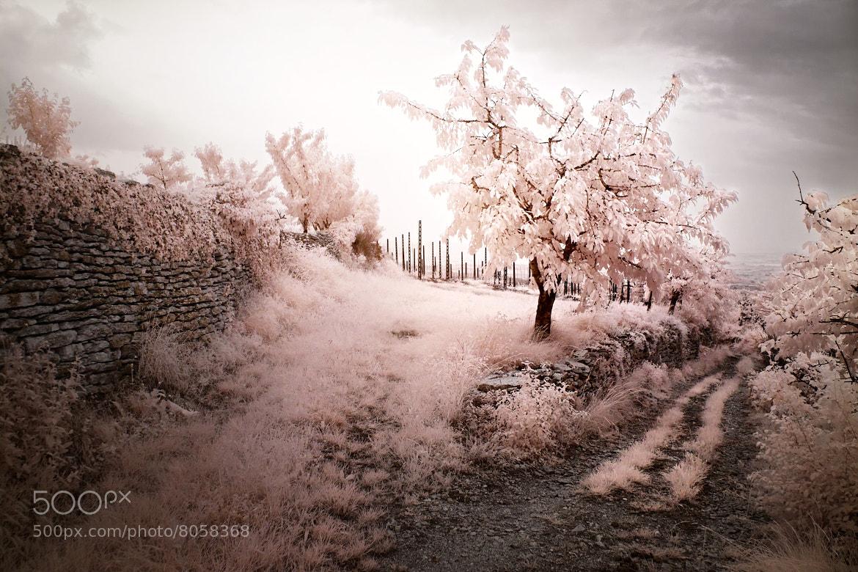 Photograph Valpolicella Pink by Mattias Hammar on 500px