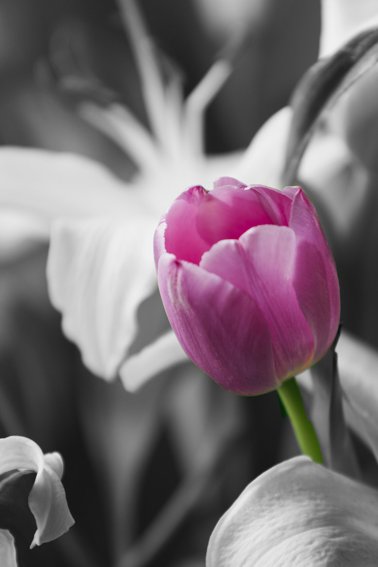 Photograph Pink by Dr Nasseem Malouf on 500px