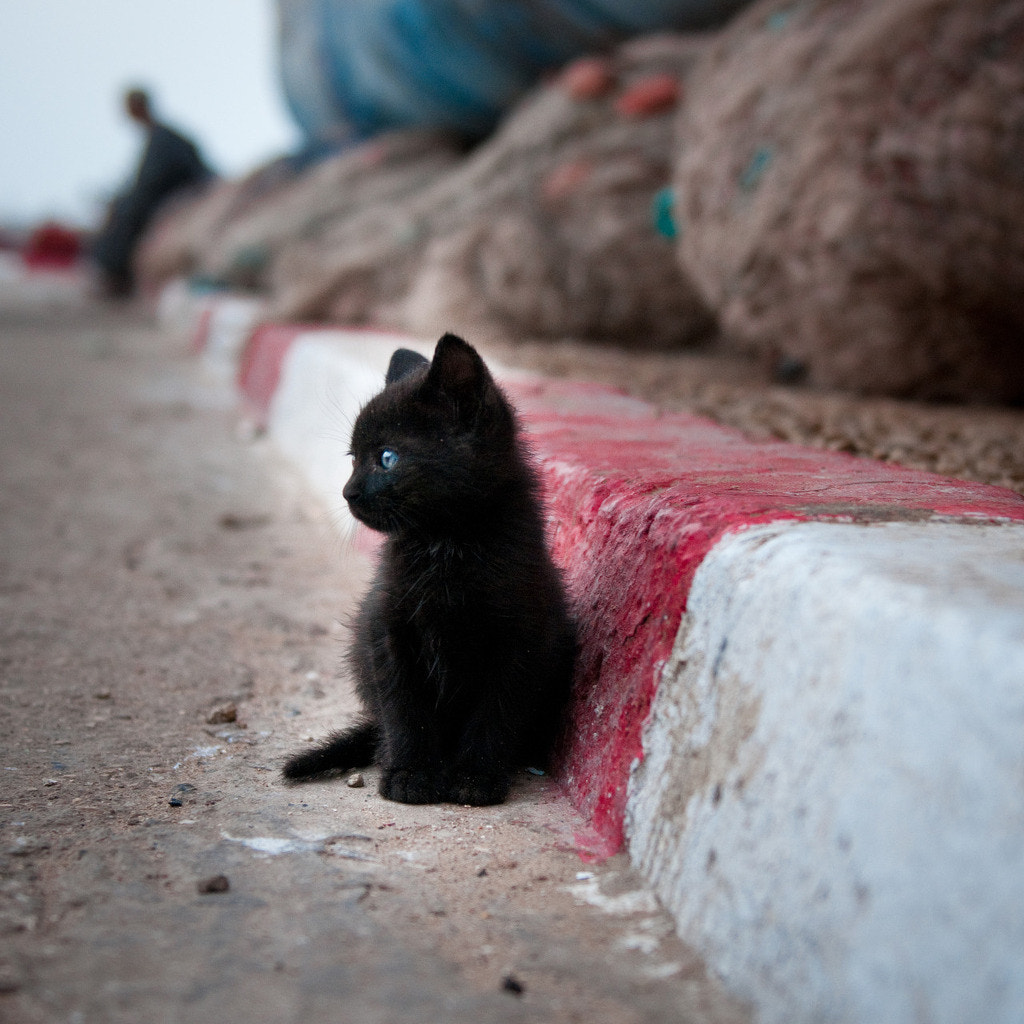 Photograph baby cat by Vector Wong on 500px