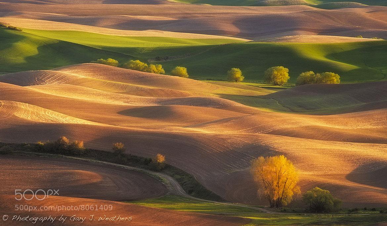 Photograph Saffron Sunrise by Gary Weathers on 500px