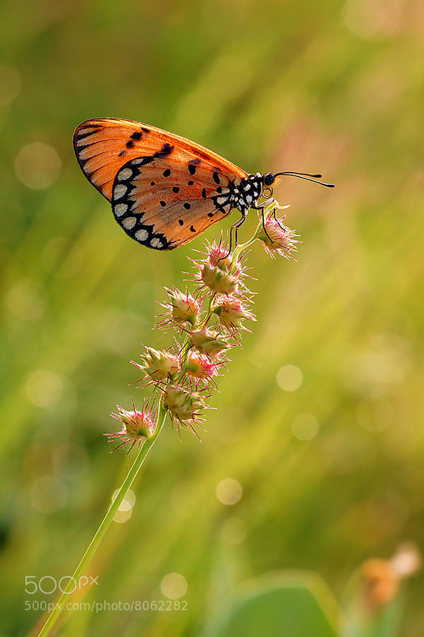 Photograph :: see you at the top :: by Setyawan B. Prasodjo on 500px