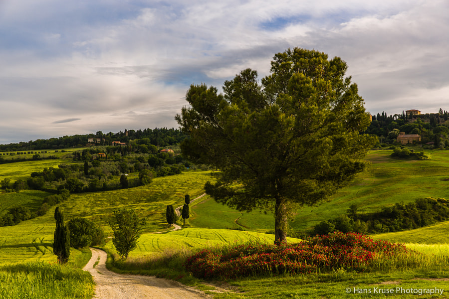 This photo was shot during the Tuscany May 2014 photo workshop. There is a new Tuscany May 2015 photo workshop available for bookings. The first bookings are coming in now so it's time to secure a seat on this workshop.