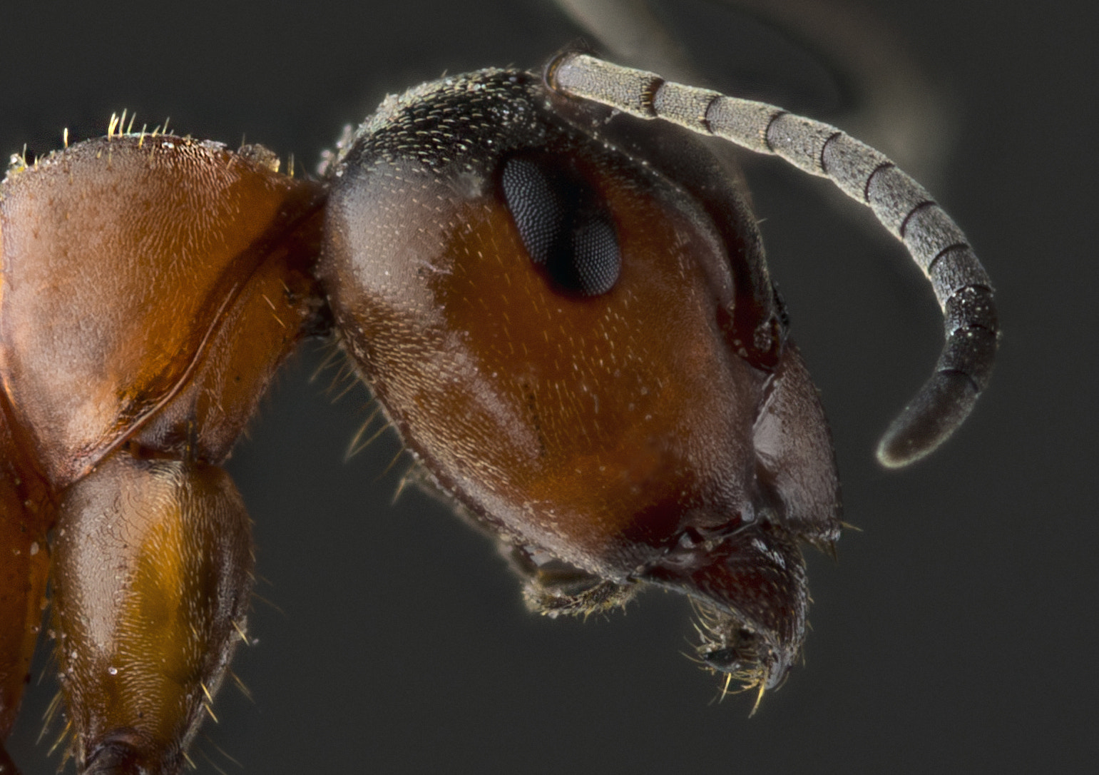 Photograph Ant by Mikael Sundberg on 500px