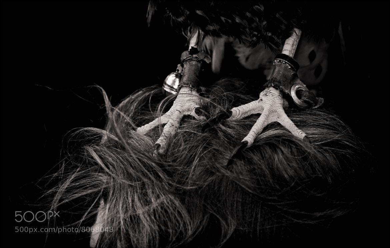 Photograph Talons! (2), or Harris Hawk Head Massage... by Mat Whittington on 500px