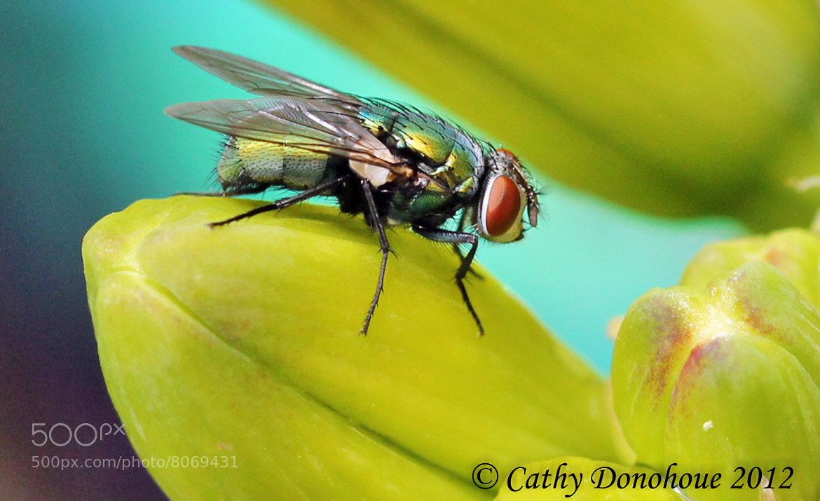 Photograph The Fly by Cathy  Donohoue on 500px