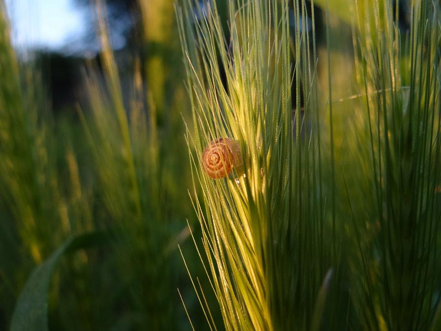 Little snail sunbathing