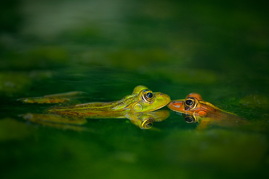 Photograph Four eye meeting by Tomer Yaffe on 500px