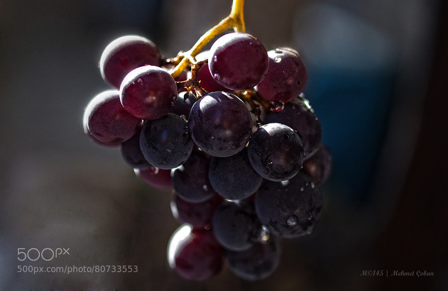 Photograph black grapes by Mehmet Çoban on 500px