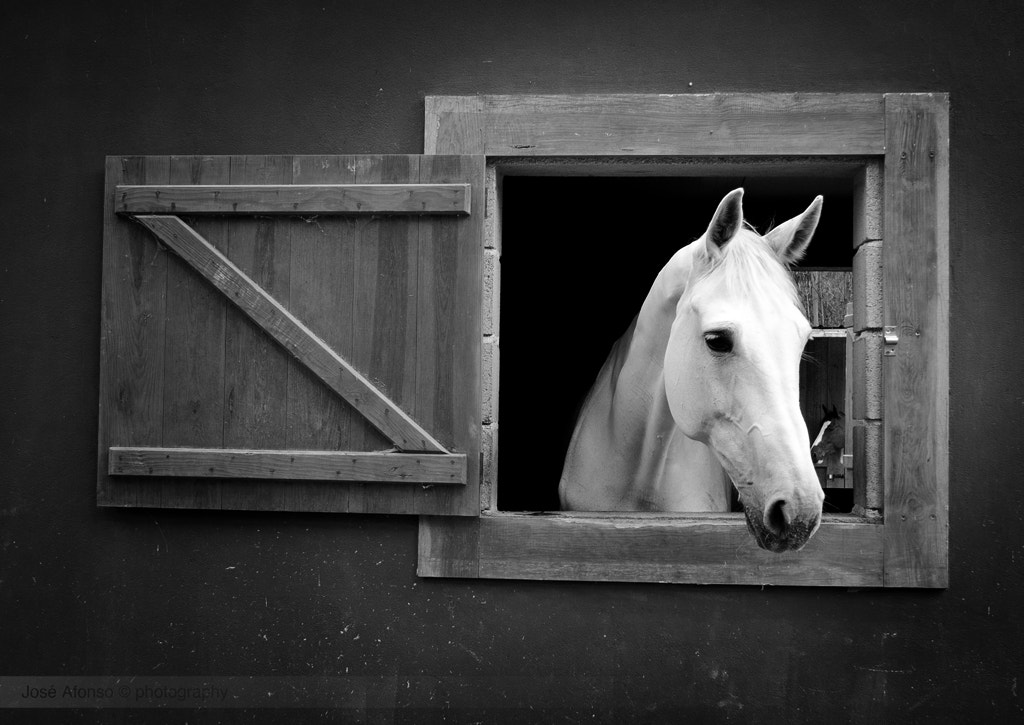 Photograph The window  by José Afonso on 500px
