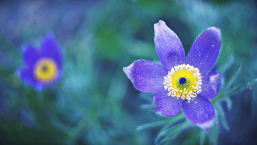 Photograph Spring is coming... by Gosia Gorecka on 500px