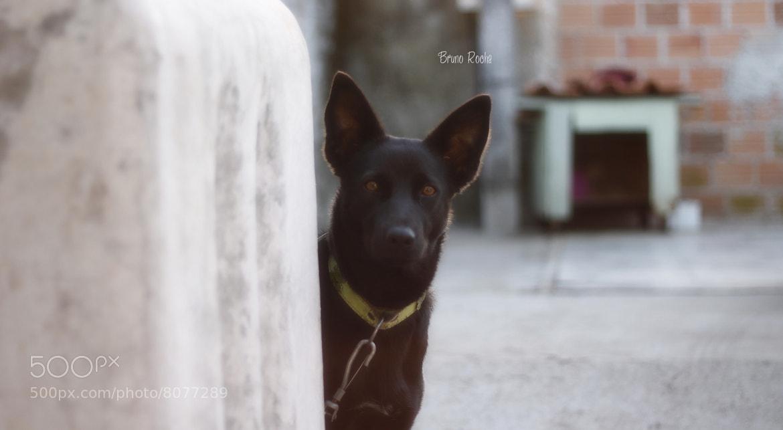 Photograph cão by Bruno Vellozo on 500px