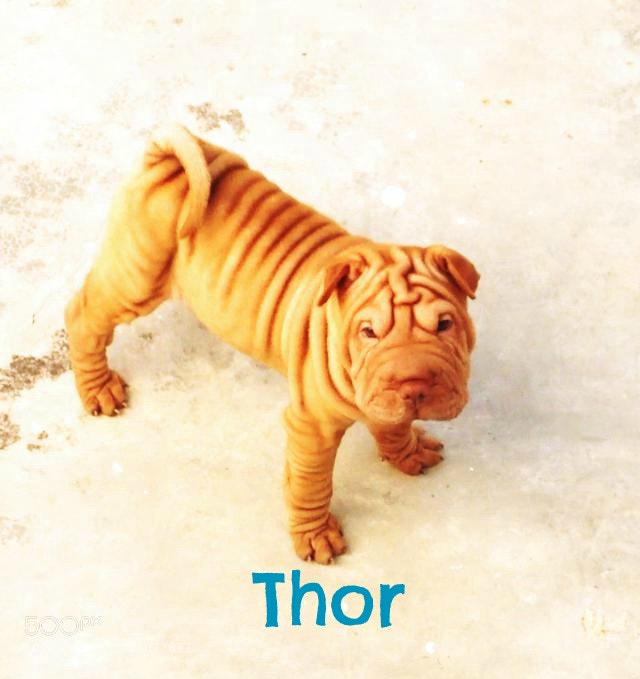 Photograph little Thor! :) by Has Cruz on 500px