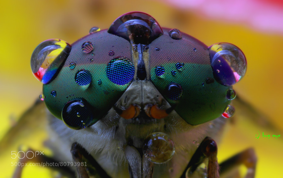 Photograph The eye by bug eye :) on 500px