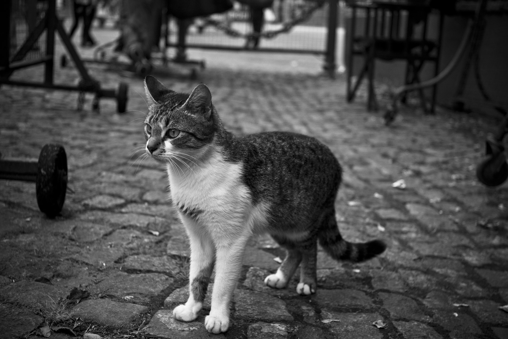 Photograph Kitty by Scot Steele on 500px