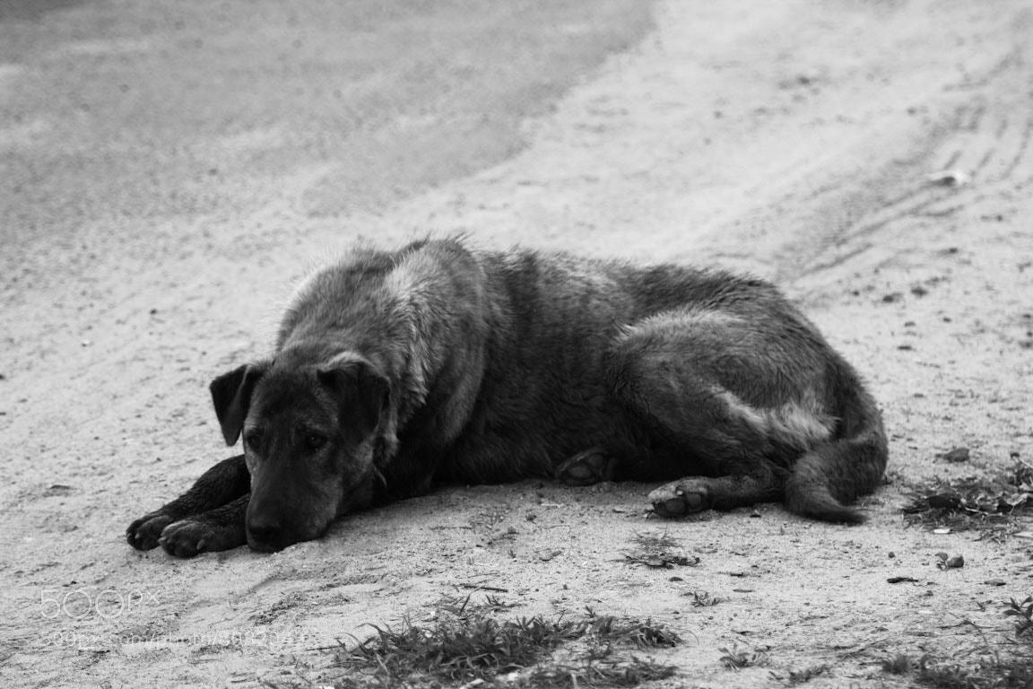 Photograph Lonely Dog by Dmitry Veleskevich on 500px