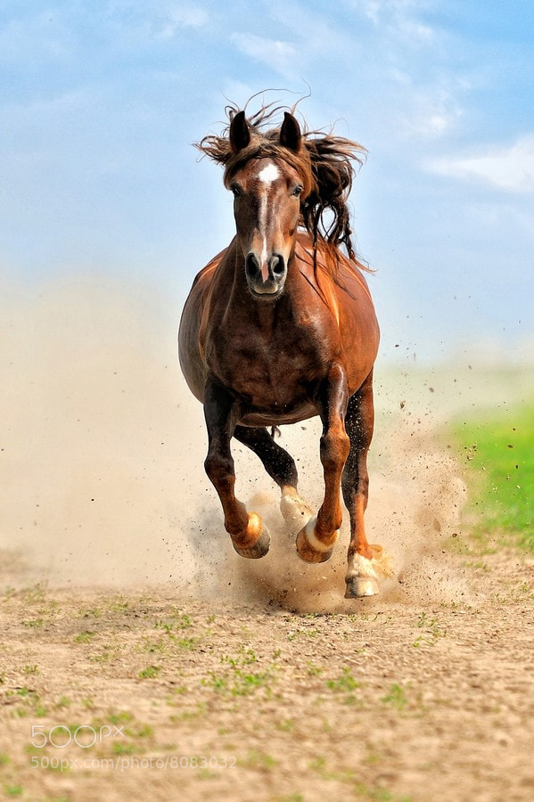 Photograph Horse by Volodymyr Burdyak on 500px