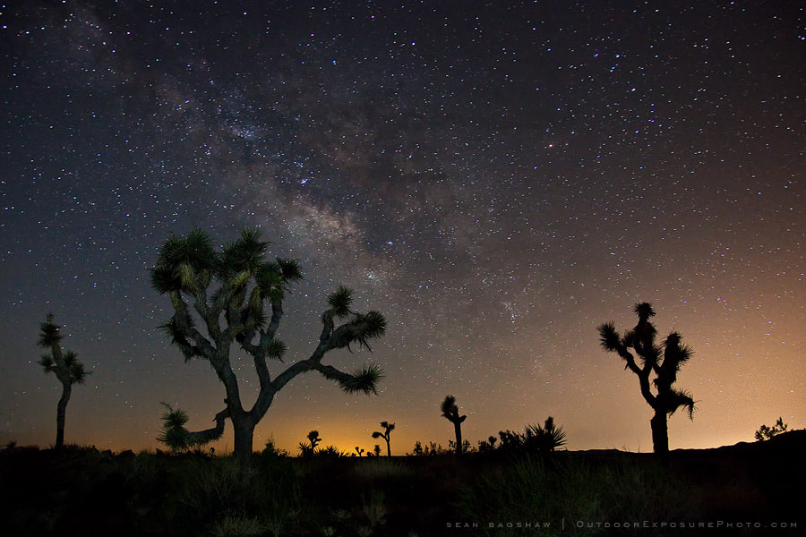 Photograph Joshua Trees And The Galaxy by Sean Bagshaw on 500px