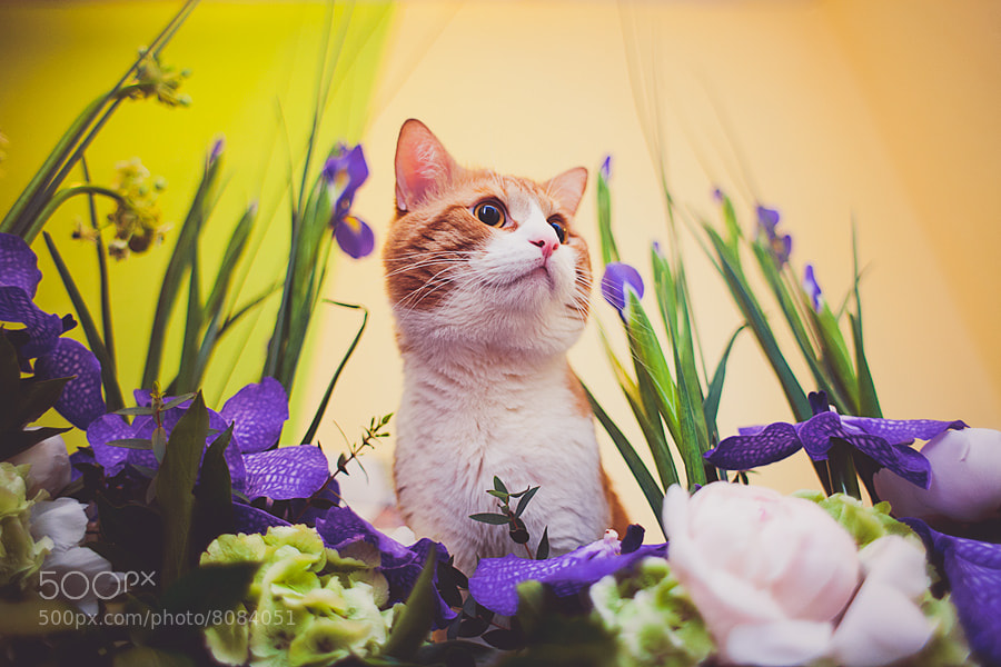 Photograph king of flowers by Olga Muhelema on 500px