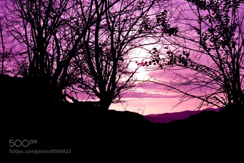 Photograph Purple Sunset by Burim Fejsko on 500px