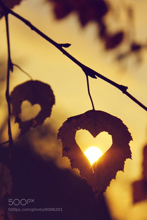 Photograph Love autumn by Khristina Pyzyak on 500px