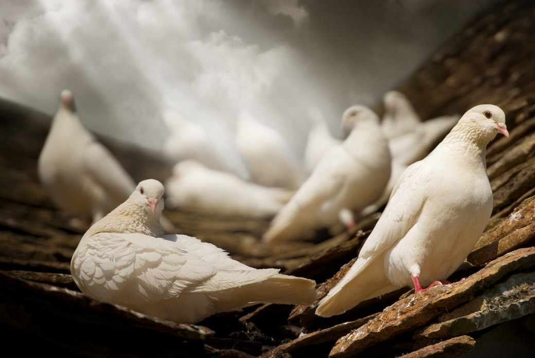 Photograph White Doves by Audran Gosling on 500px