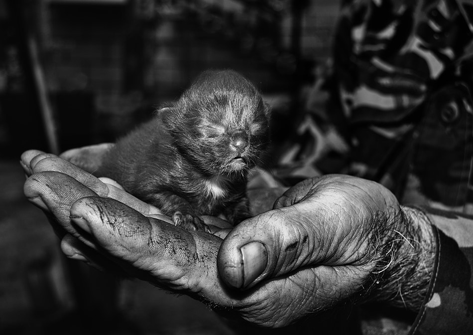 Photograph A Handful of Happiness by Silvia S. on 500px