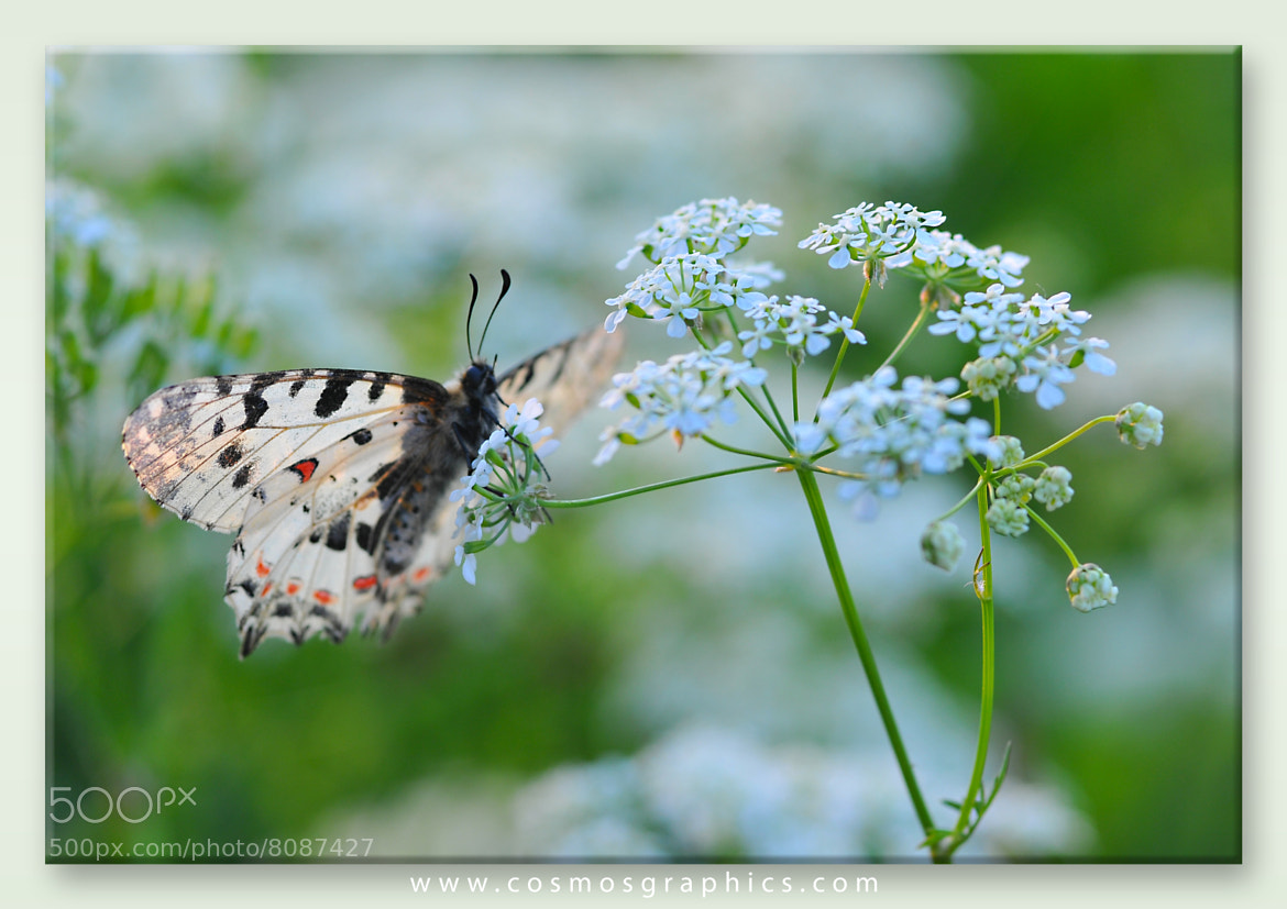 Photograph SPRING by Imir Kamberi on 500px