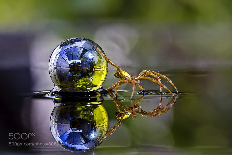 Photograph leave the world by Nunu Rizani on 500px